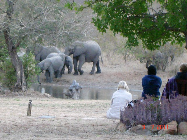 kambaku-elephants-camp