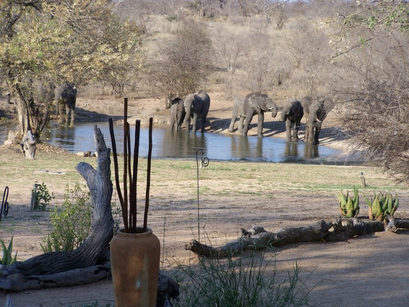 kambaku-elephants-infront-of-lodge