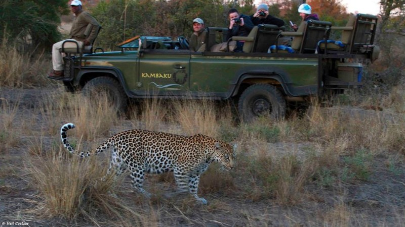 kambaku-leopard-during-game-drive