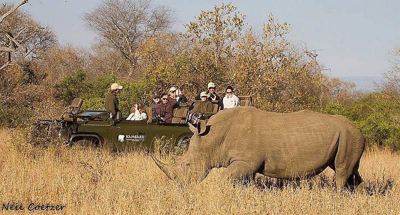kambaku-rhino-game-drive