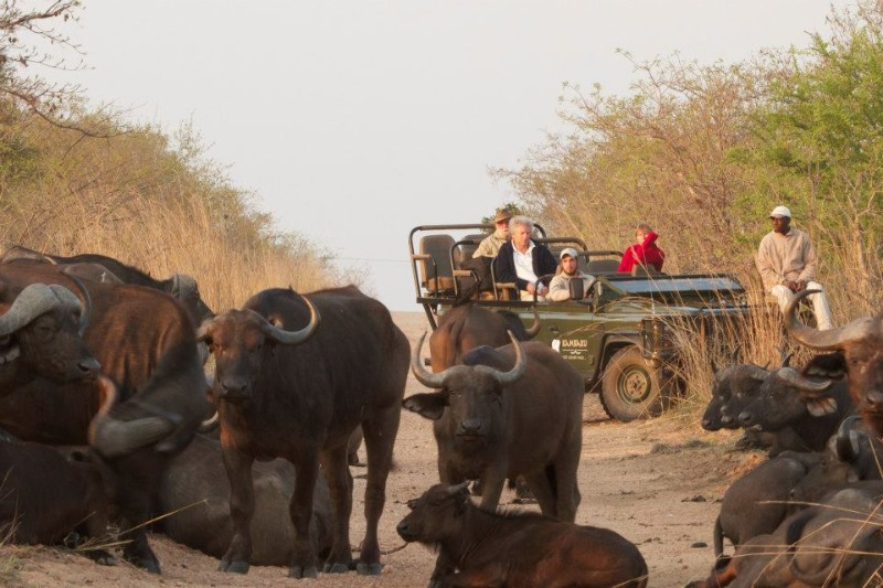 kambaku-safari-lodge-buffalo-game-drive