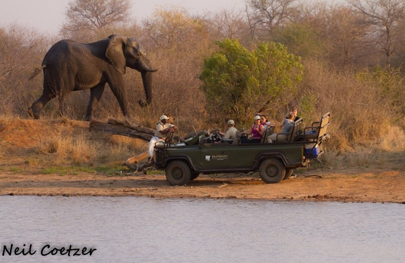 kambaku-safari-lodge-elephant-game-drive