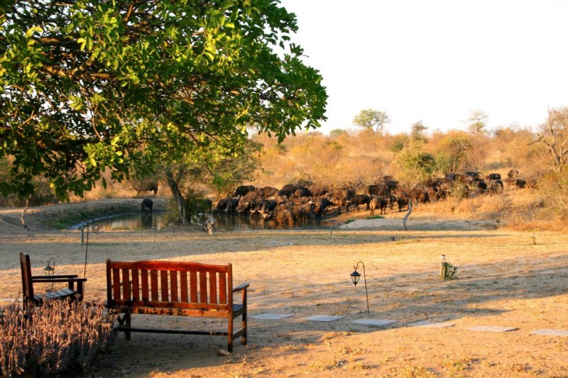 kambaku-safari-lodge-water-hole