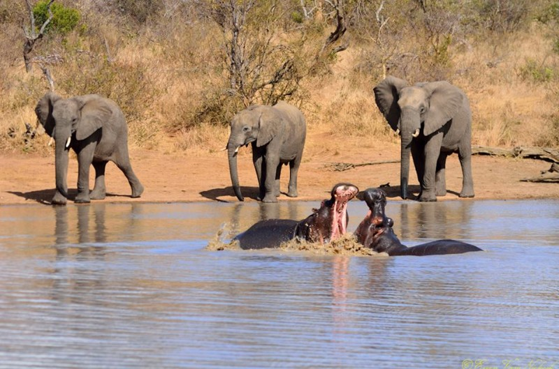 kambaku-river-sands-elephants-and-hippo