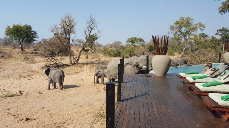 kambaku-river-sands-elephants-at-lodge