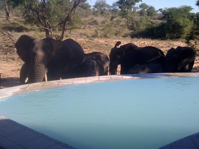 kambaku-river-sands-elephants-at-pool