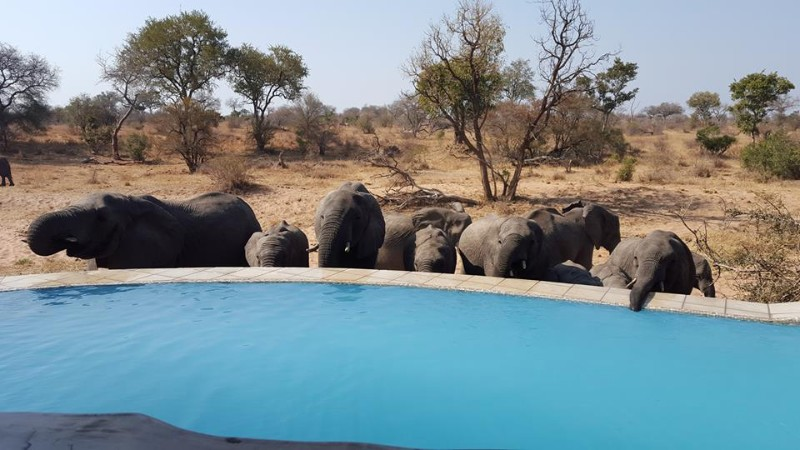kambaku-river-sands-elephants-drinking-at-pool