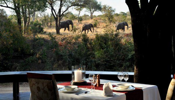 safari destinations imbali breakfast strolling elephants