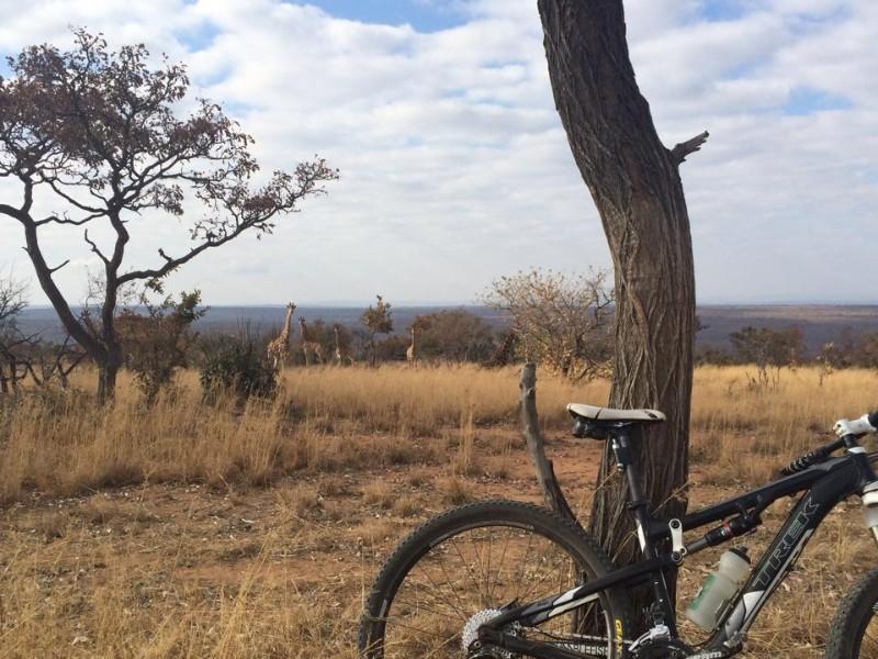 activity-mountain-bike-giraffe