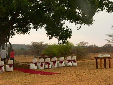 wedding-under-tree