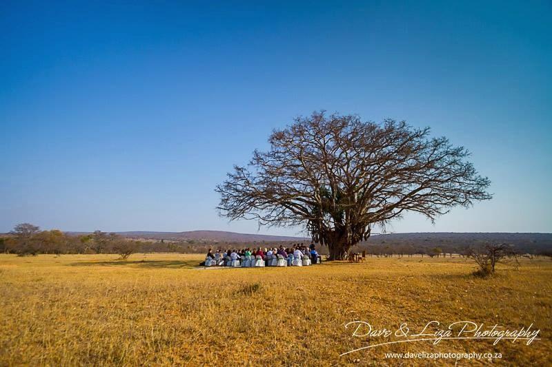 wedding-venue-tree
