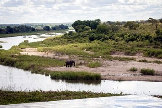 hippo-hills-view-elephant