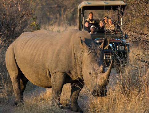 ekuthuleni-Welgevonden-rhino