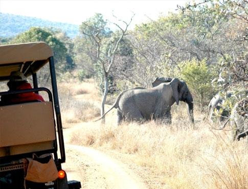ekuthuleni-elephant-game-drive
