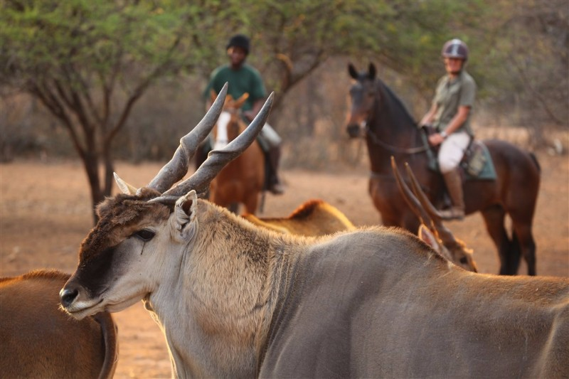 Riding-safaris-at-Ants-1_renamed_1617