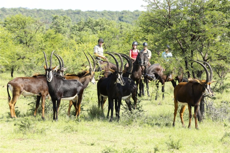 Riding-safaris-at-Ants-37