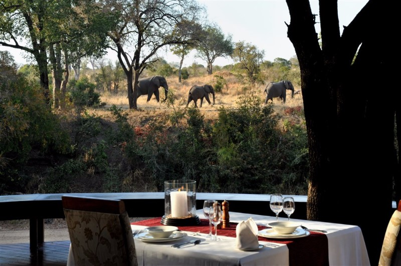 DECK-AREA-VIEW-OF-ELEPHANT