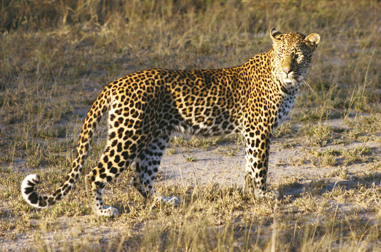 cheetah-tuningi-safari-lodge-game-drive