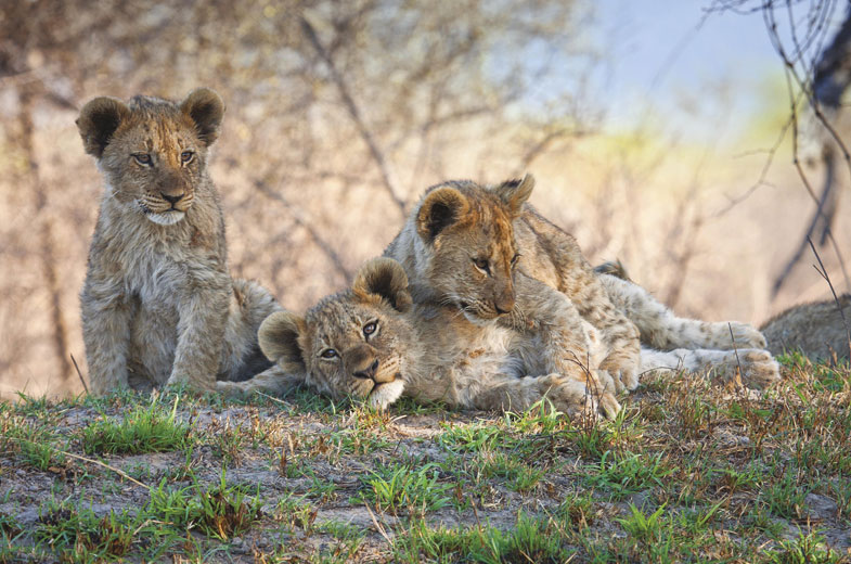 cubs-tuningi-safari-lodge-game-drive