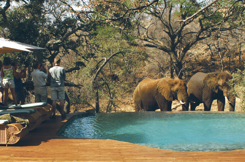 elephants-tuningi-safari-lodge-game-drive