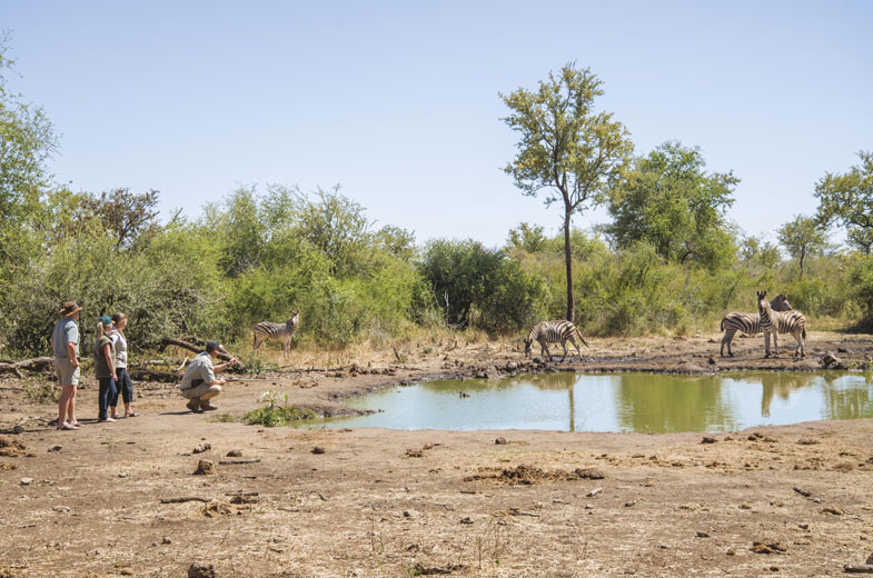 tuning-bush-walk-madikwe