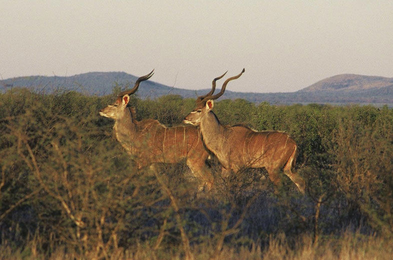 tuningi-wildlife-south-africa