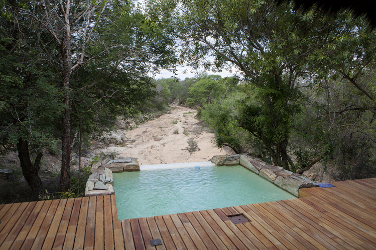Camp-jabulani-Accommodation_Luxury-and-Deluxe-Suite_Plungepool-and-Deck
