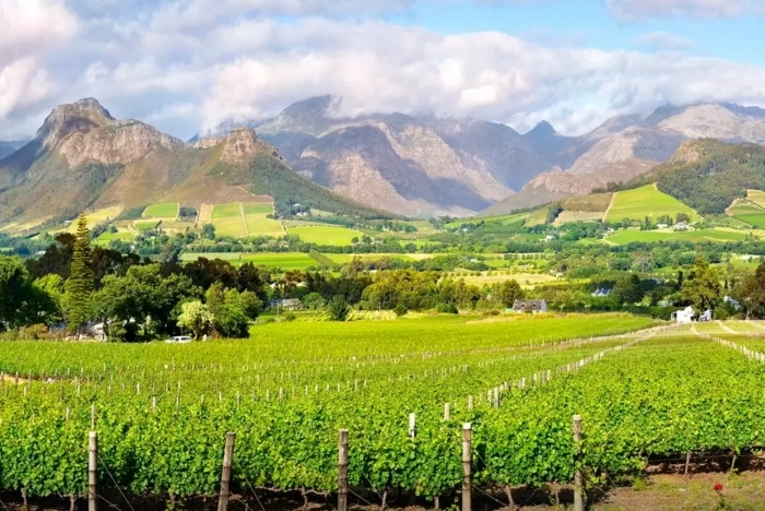the-vineyards-at-franschhoek-cellars-1