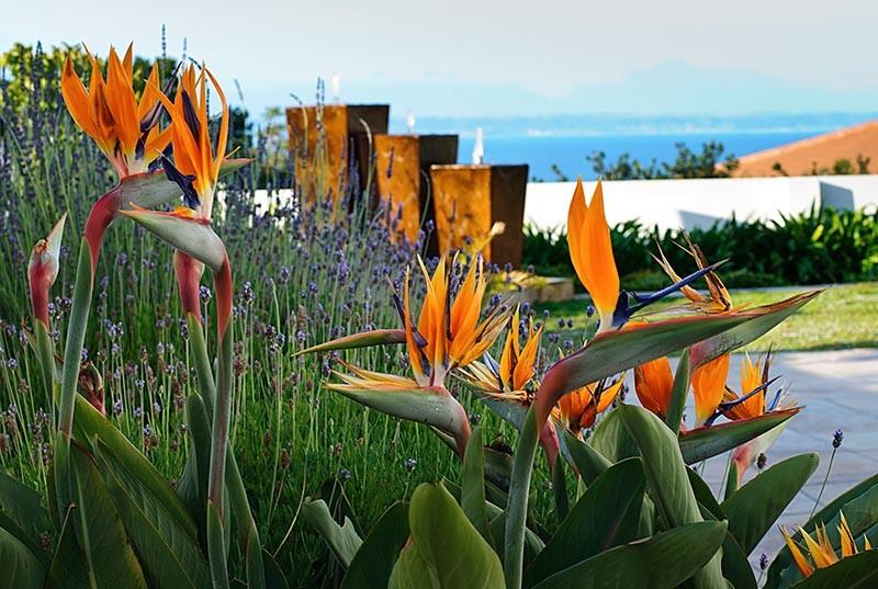 garden-ocean-view-1