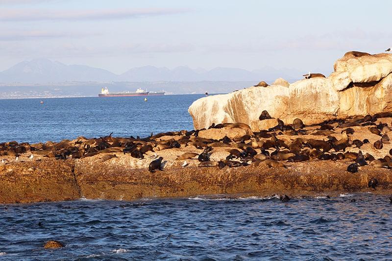 seal-island-1
