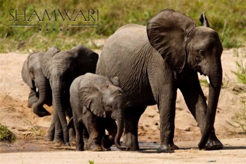 jock-wildlife-elephant-family
