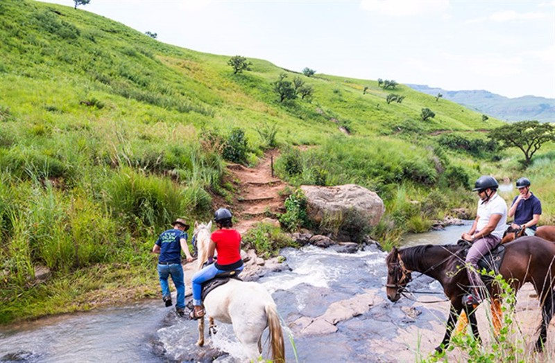 AlpineHeath-outdoor-horse-stream