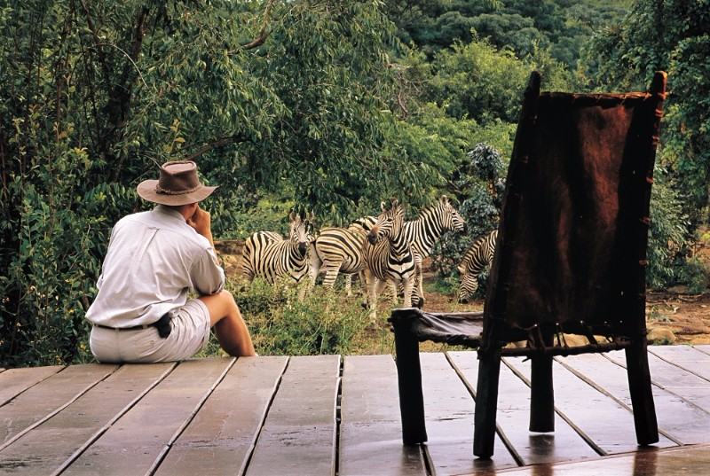Zebra-infront-of-the-Indaba-Lounge-1