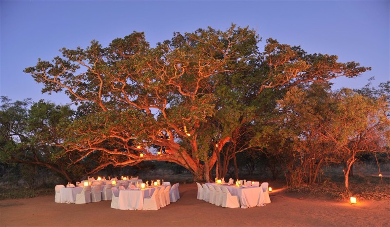 FIG-TREE-GROUP-DINING-AREA
