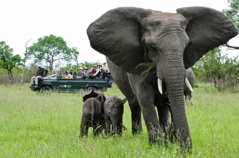 Elephant-14_1