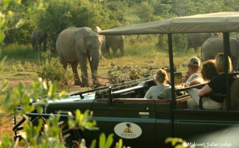 makweti-safari-lodge-elefant-fahrzeug