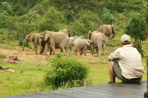 makweti-safari-lodge-elephant-viewing-within-camp-590x390