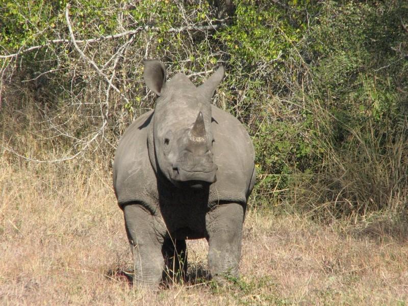 Umkumbe-Safari-Lodge-Baby-Rhino