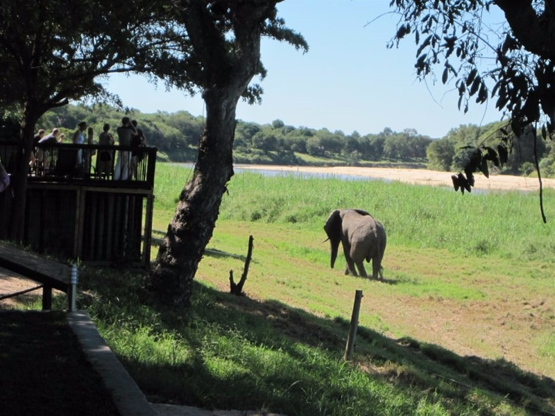 Umkumbe-Safari-Lodge-Elephant-Lodge