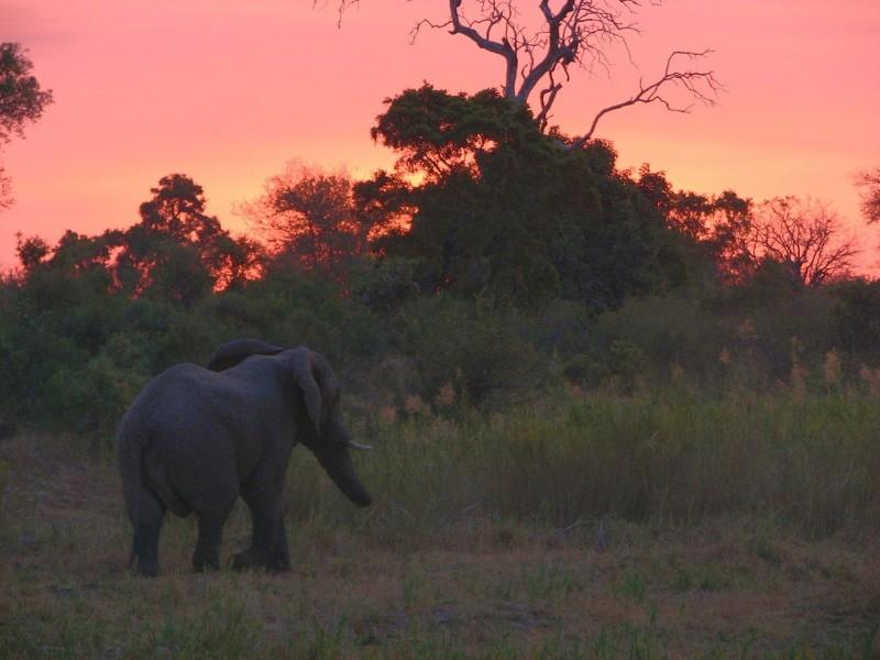 Umkumbe-Safari-Lodge-Elephant-Sunset