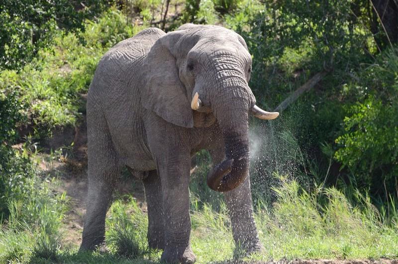 Umkumbe-Safari-Lodge-Elephant-Trunk