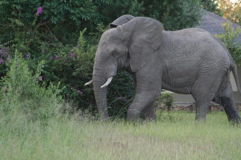 Umkumbe-Safari-Lodge-Elephant-Walk-Past-Room-1