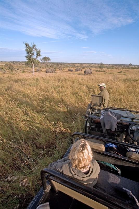 Umkumbe-Safari-Lodge-Elephants-Game-Drive