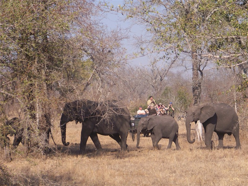Umkumbe-Safari-Lodge-Eles-Game-Drive