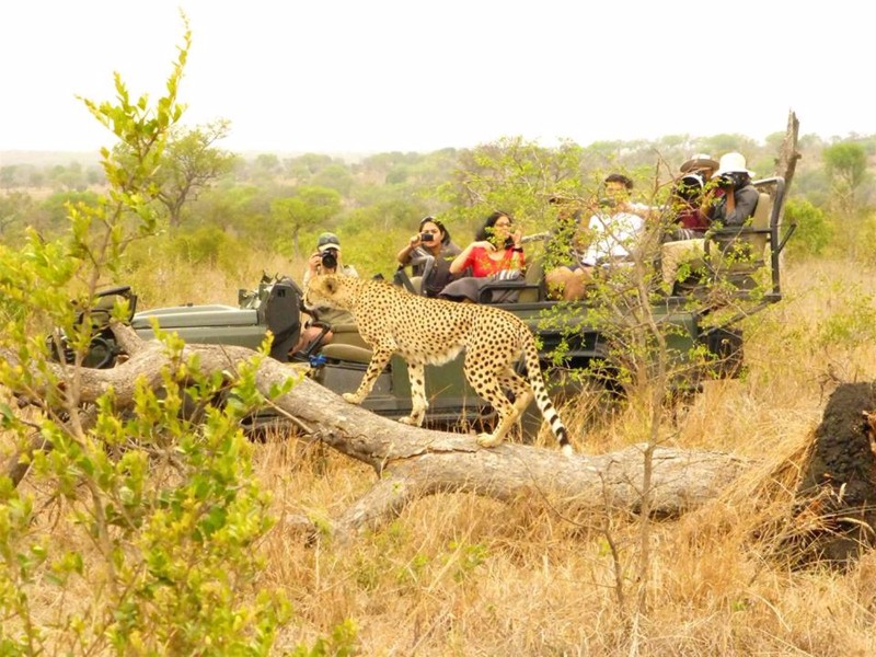 Umkumbe-Safari-Lodge-cheetah-game-drive