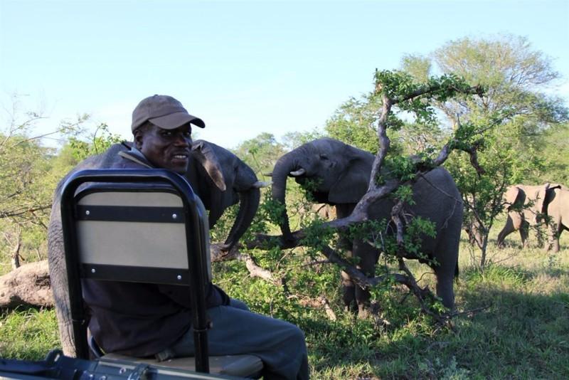 elephant-game-drive-isaac