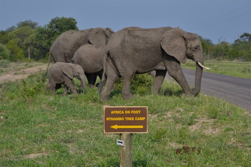 elephants-directions-chad