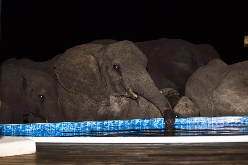 elephants-drink-from-pool-yolandi