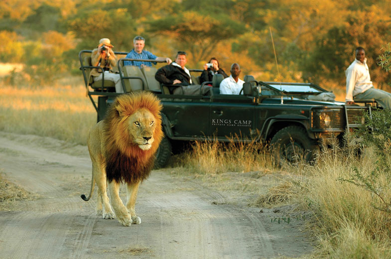 safari-drive-to-view-lions