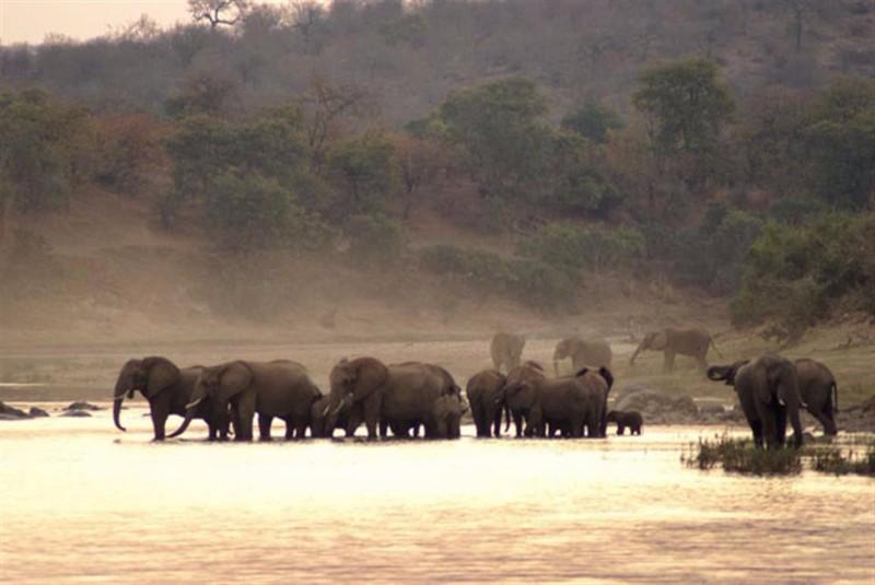 elephants-at-simbavati-river-lodge